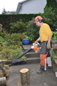 urban tree care - ken pugh 065 200x301